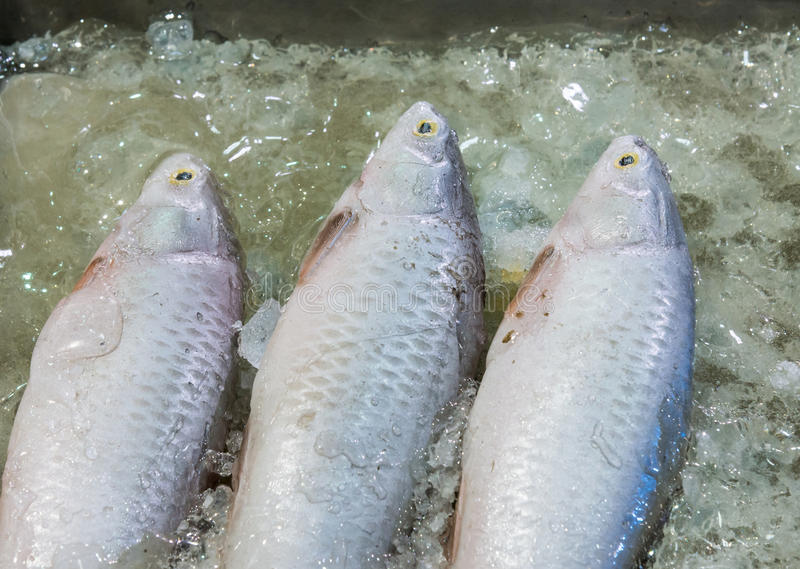 Fresh sea fish. stock photo