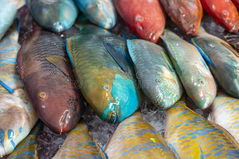 Fresh sea fish for sell at the street food market in Kota Kinabalu, Borneo, Malaysia, close up seafood. Fresh sea fish for sell at the street food market in Kota royalty free stock photo