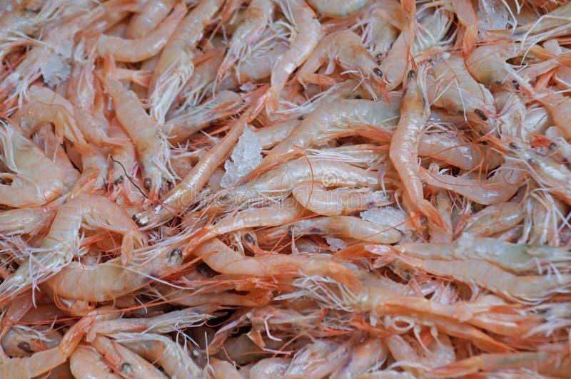 Fresh sea prawns royalty free stock photos