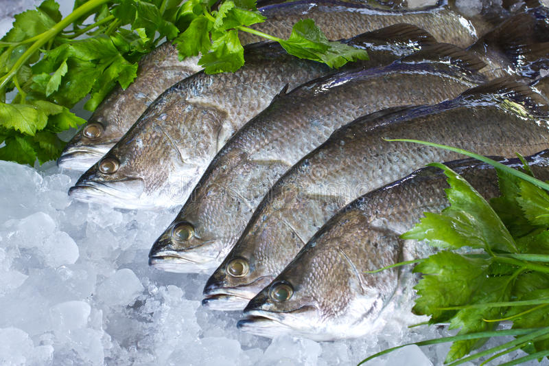 Fresh Seabass. And vegetables chilled on ice stock images