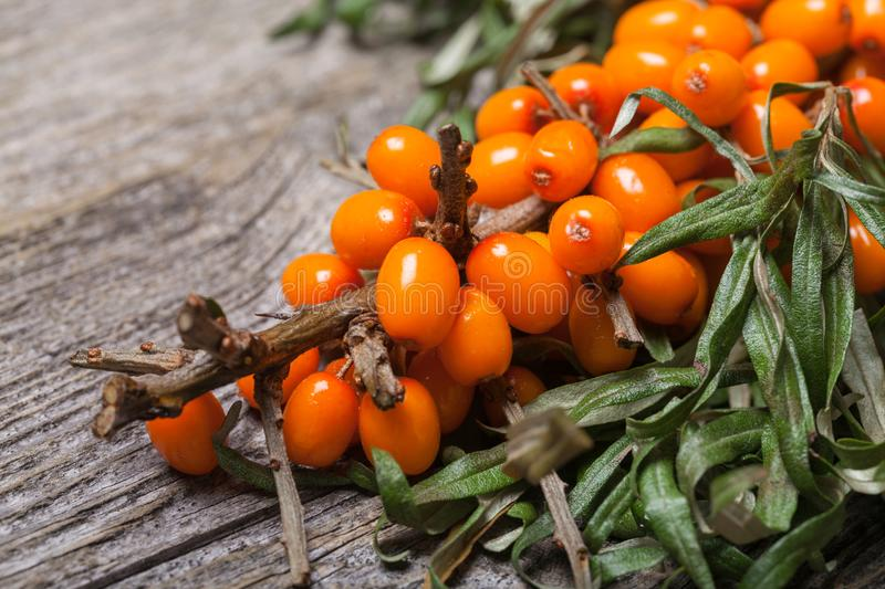 Fresh seabuckthorn on the table royalty free stock photography