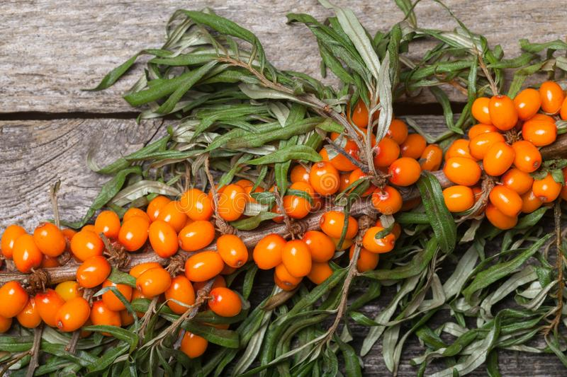 Fresh seabuckthorn on the table. Fresh seabuckthorn on the vintage wooden table stock photos