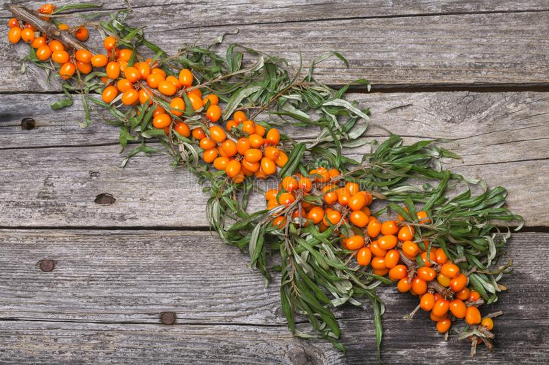 Fresh seabuckthorn on the table. Fresh seabuckthorn on the vintage wooden table royalty free stock photo