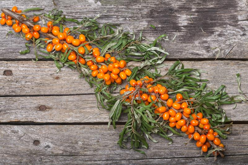 Fresh seabuckthorn on the table. Fresh seabuckthorn on the vintage wooden table stock images