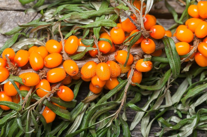 Fresh seabuckthorn on the table stock photo