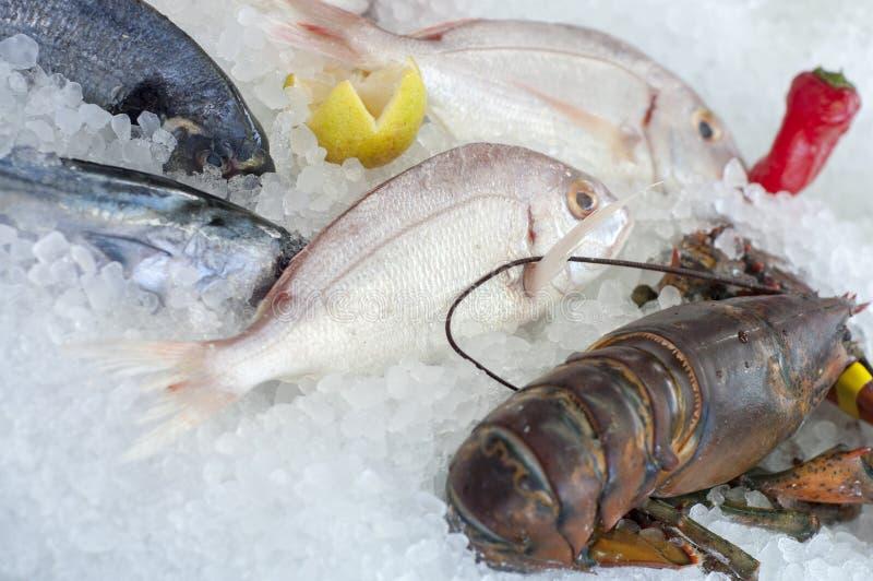 Fresh seafood royalty free stock image
