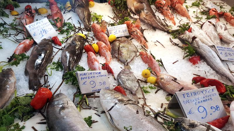 Fresh seafood arrangement displayed in fish market royalty free stock images