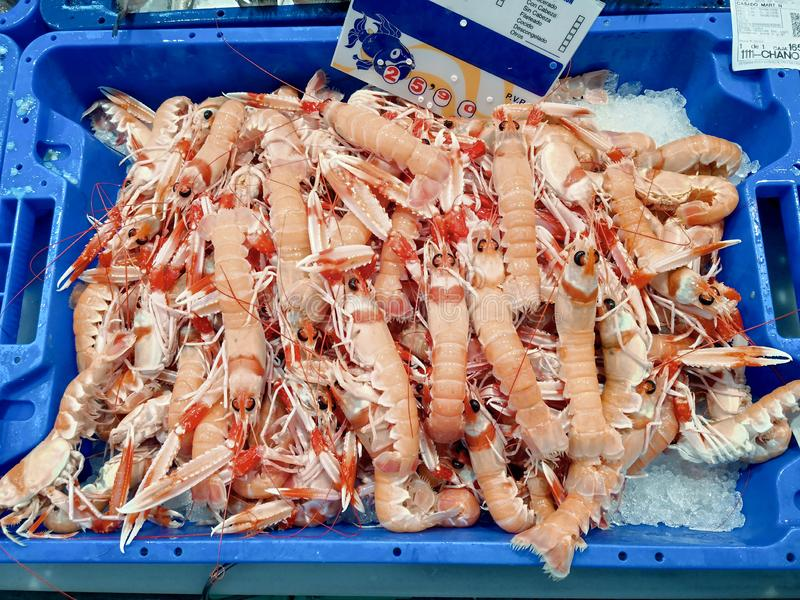Fresh seafood Norway lobster on ice at the Isla Crsitina fish market, Huelva, Spain.  royalty free stock photos