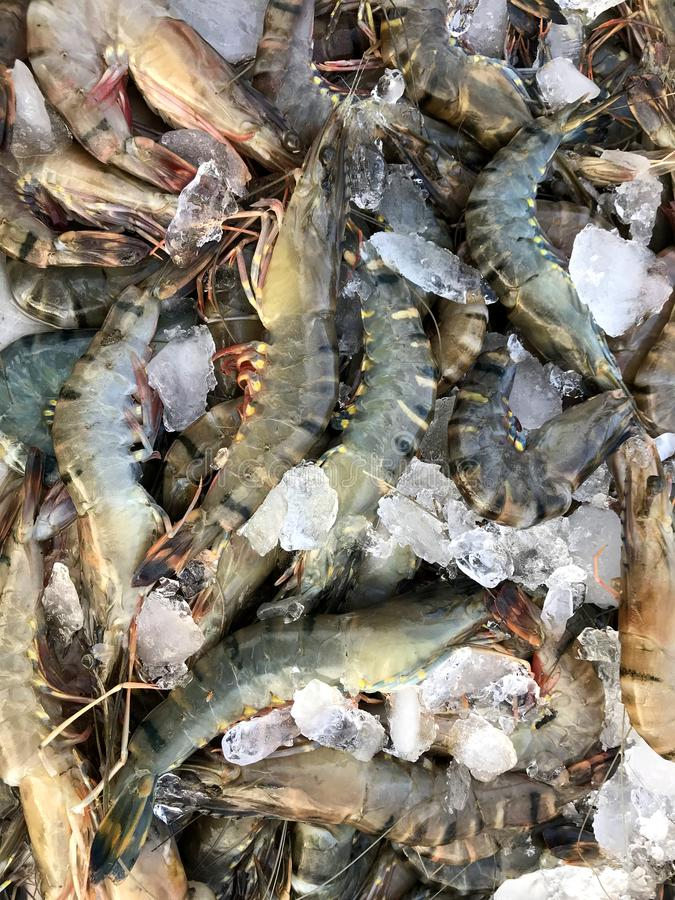 Fresh Seafood sales at the market. Phuket in Thailand royalty free stock photos