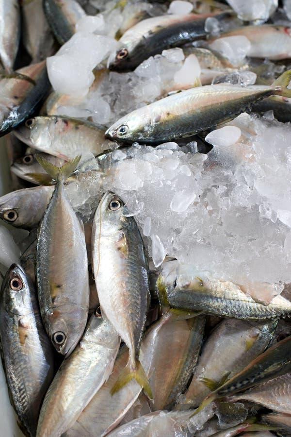 Download Fresh Seafood Short-bodied Mackerel Stock Image - Image of ingredient, diet: 67961675