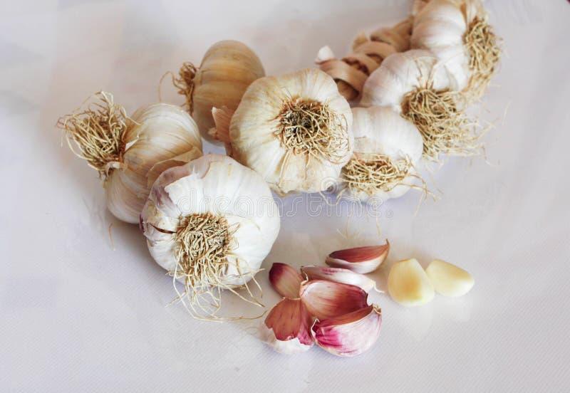 Fresh seasonal garlic isolated on white background royalty free stock photos