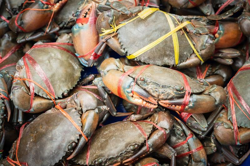 Fresh serrated mud crabs prepare to sell on street food market, Giant Mud Crabs, SERRATED MUD CRAB, Scylla serrata. Fresh serrated mud crabs prepare to sell on royalty free stock photo