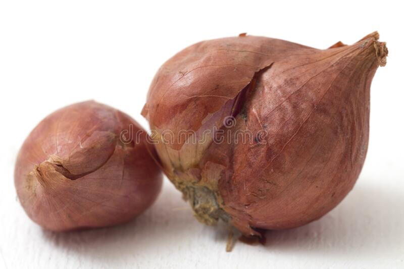 Fresh shallots isolated on white. Beautiful Fresh shallots isolated on white background royalty free stock photo