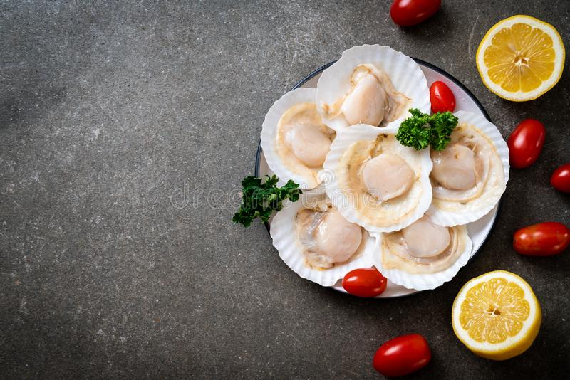 Fresh shell scallop. On wood board royalty free stock photos