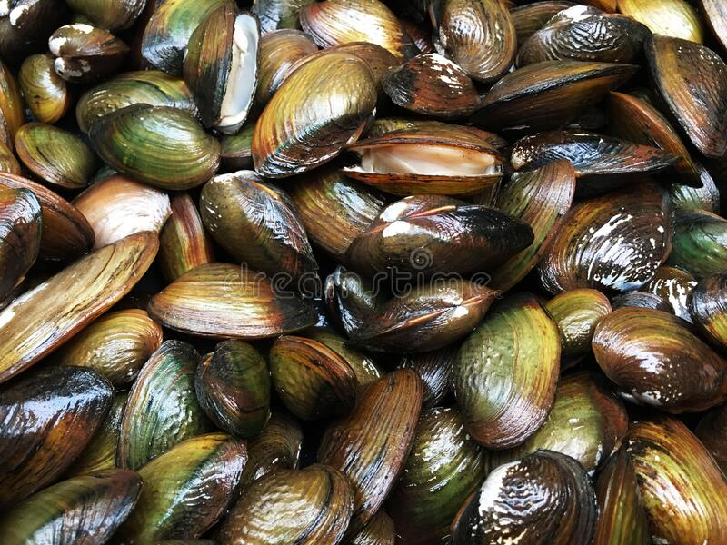 Fresh shellfish for pattern or background royalty free stock photos