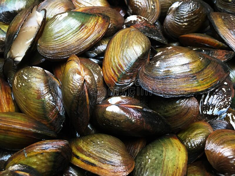 Fresh shellfish for pattern or background royalty free stock images