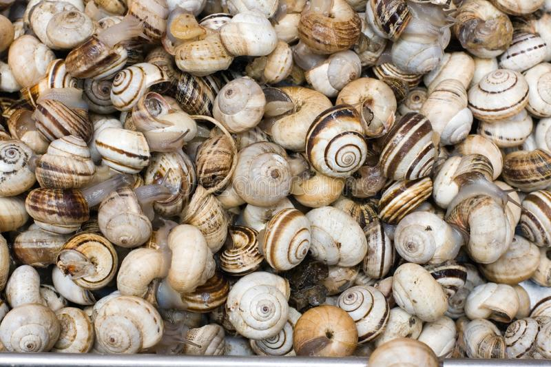 Fresh shellfish for sale royalty free stock images