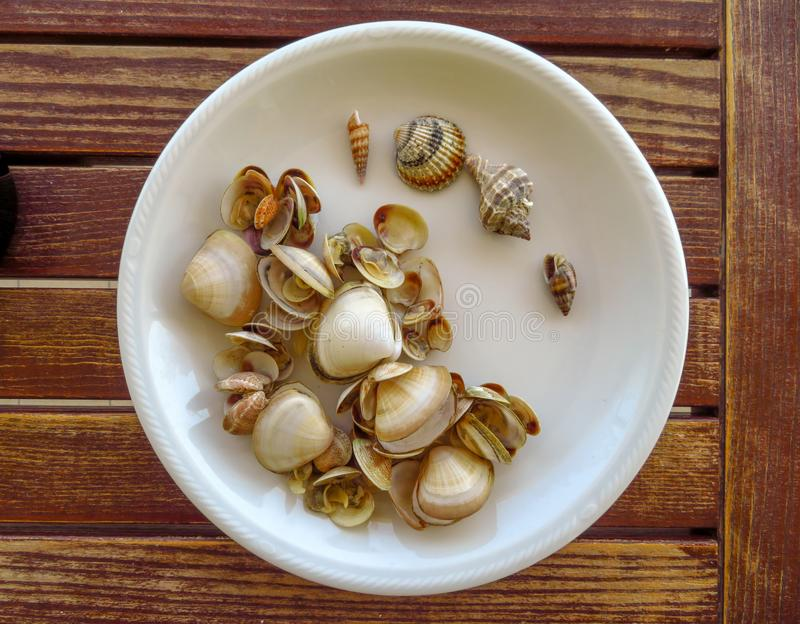 Fresh shells on the dish royalty free stock photography