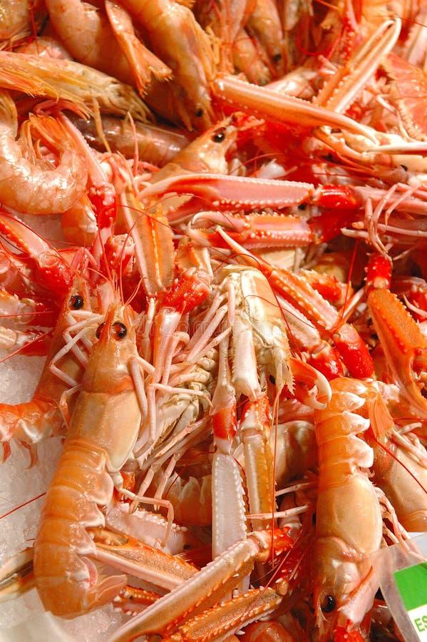 Download Fresh shrimp stock photo. Image of prawns, fresh, shrimps - 2395956