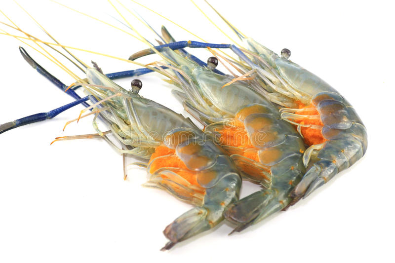 Fresh Shrimp With Eggs Color Orange Seafood Royalty Free Stock Image
