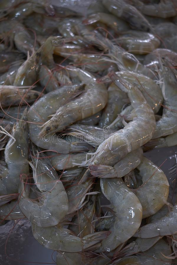 Fresh shrimp on ice, group of shrimp for sell. In the market stock images
