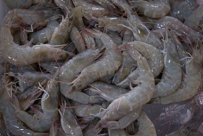 Fresh shrimp on ice, group of shrimp for sell. In the market stock photo