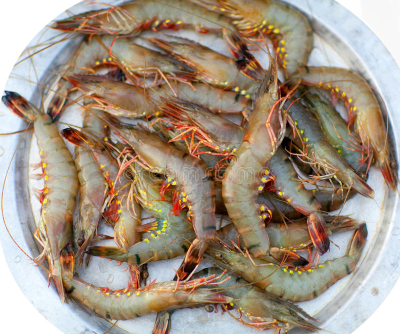 Fresh shrimp at the market royalty free stock images