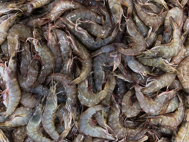 Fresh shrimp at the market for sell royalty free stock photography