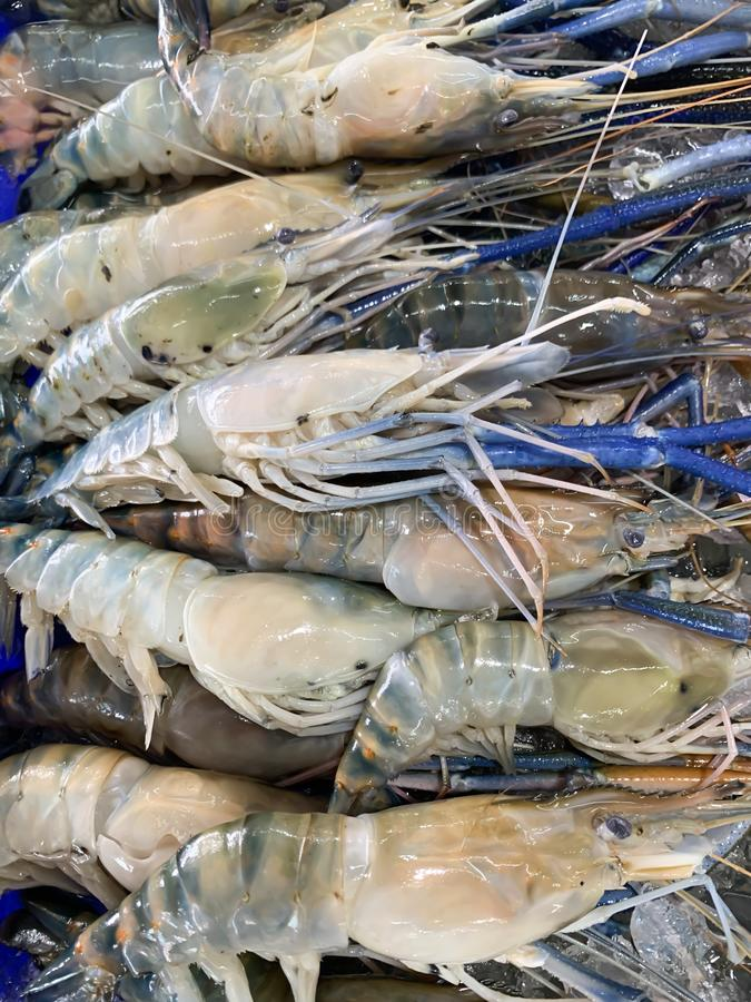 Fresh shrimp in the market stock images