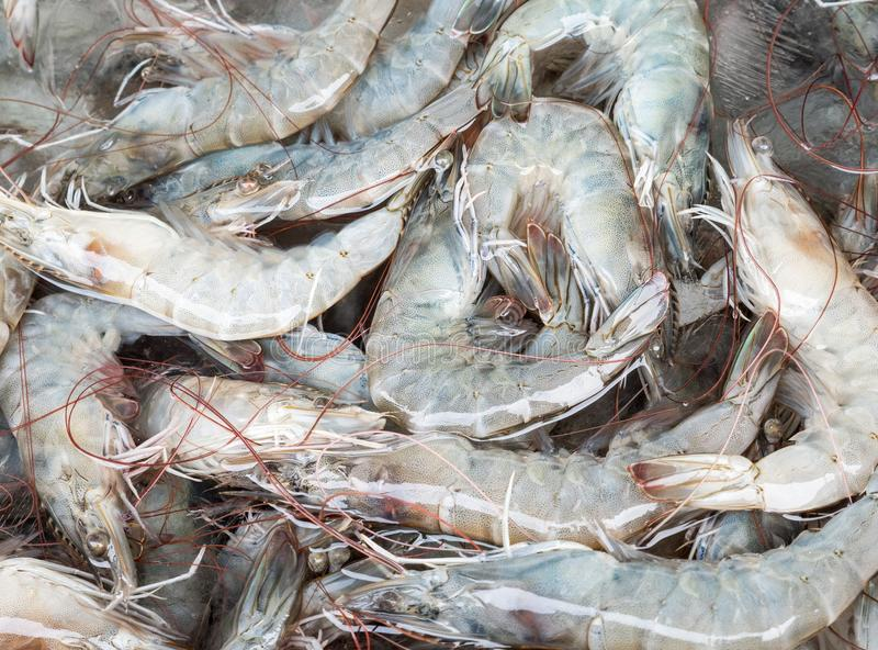 Fresh shrimp pile with the ice cube. royalty free stock photography