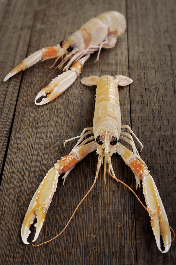 Free Fresh Shrimp Scampi Stock Photo - 2888000