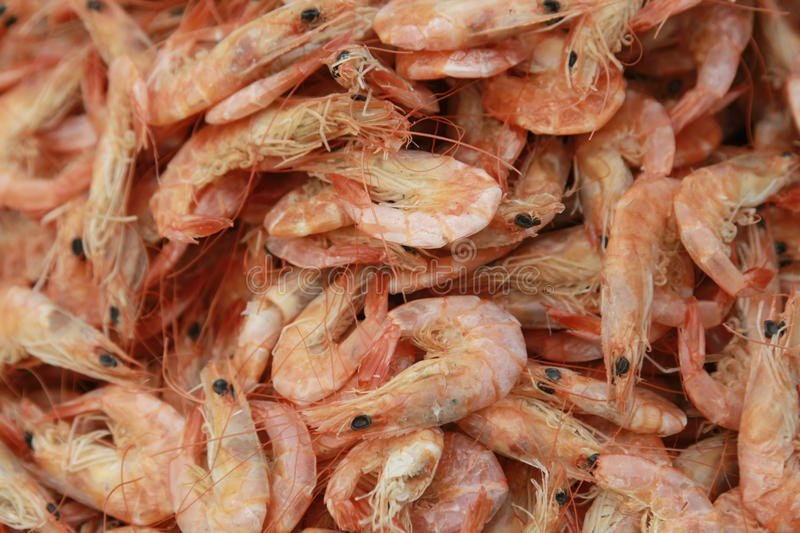 Download Fresh shrimps stock image. Image of close, fishy, head - 13069167