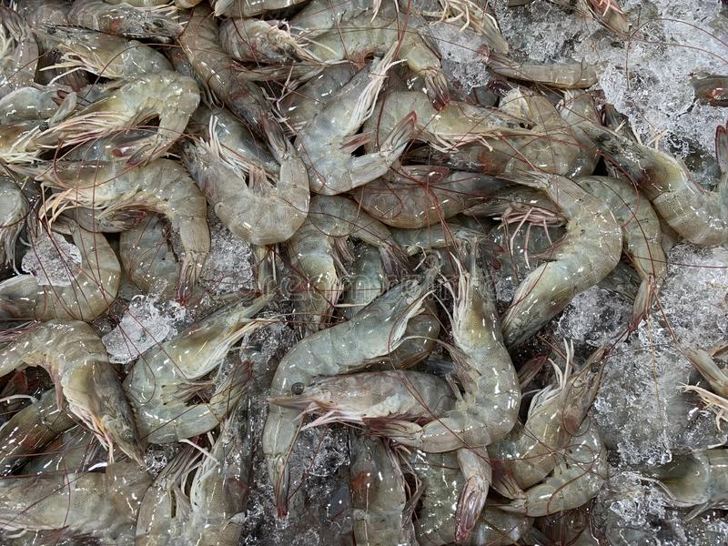 Fresh shrimps with ice selling in the market royalty free stock images