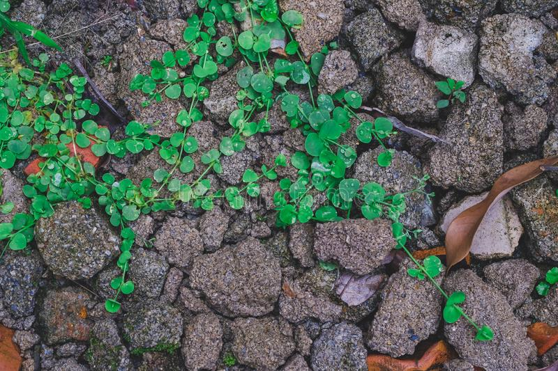Fresh Small plant on rock royalty free stock images