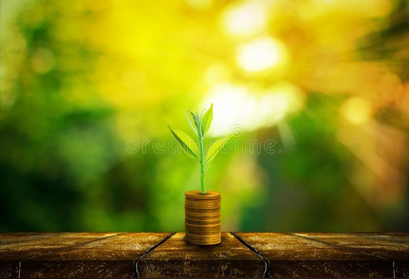 Fresh small tree growth on gold coins. With abstract blurred fresh green nature background with bokeh and sunlight, Investment concept royalty free stock image