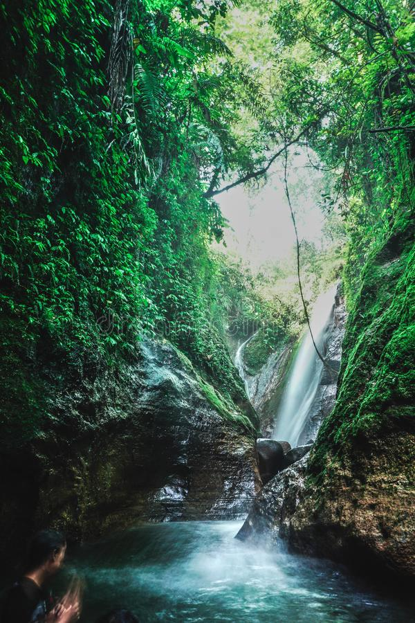 Fresh small waterfall through the tropical jungle stock images