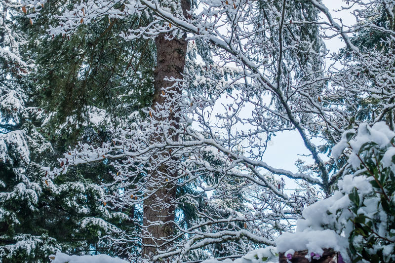 Download Fresh Snow On Branches 3 stock photo. Image of branches - 83723250