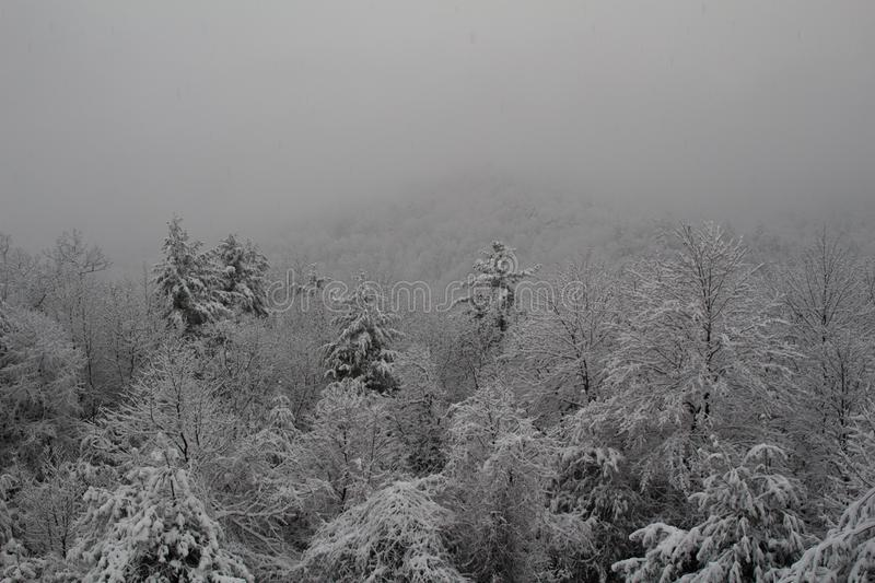 Fresh snow covered trees on the side of a mountain after a large snow storm stock photos
