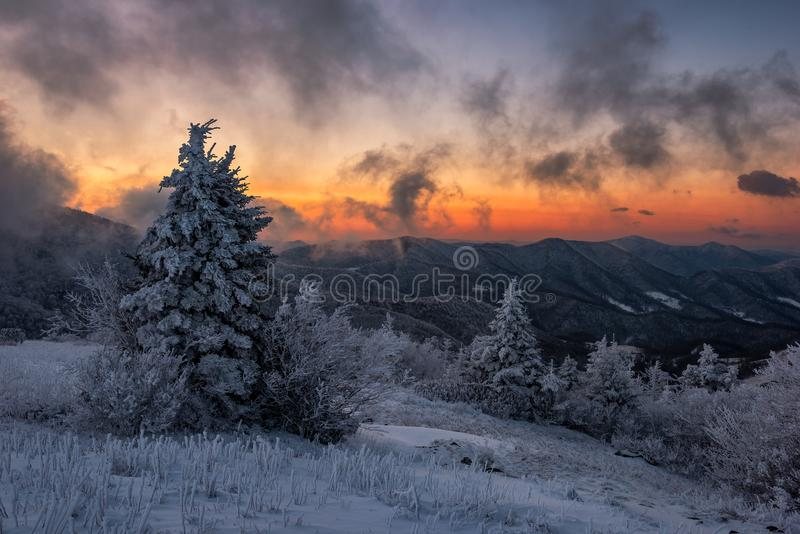 Passing fog at sunrise, wintry scenic royalty free stock images