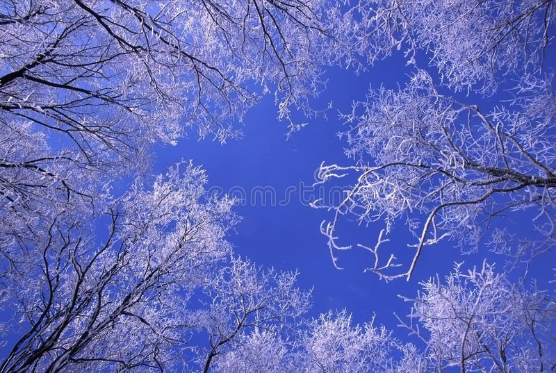 Download Fresh snowfall in Illinois stock image. Image of county - 15503371
