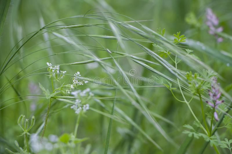 Fresh and soft green grass stock image