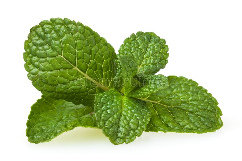 Fresh spearmint leaves isolated on white stock photo