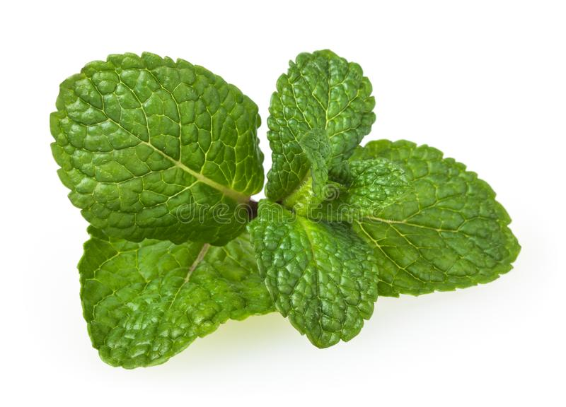 Fresh spearmint leaves isolated on white royalty free stock photography