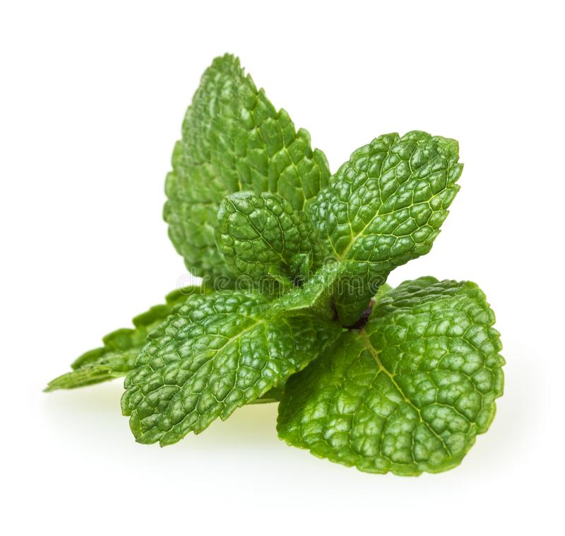 Fresh spearmint leaves on white royalty free stock image