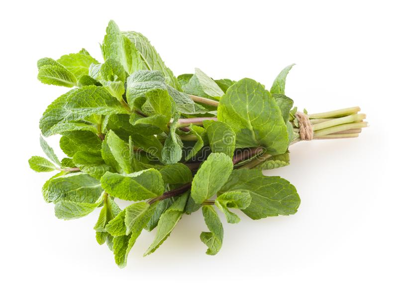Fresh spearmint leaves isolated on white royalty free stock images