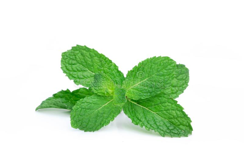 Fresh spearmint leaves isolated on the white background. Mint, p royalty free stock photography