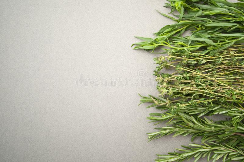 Fresh spicy herbs on a gray pastel background. royalty free stock photo