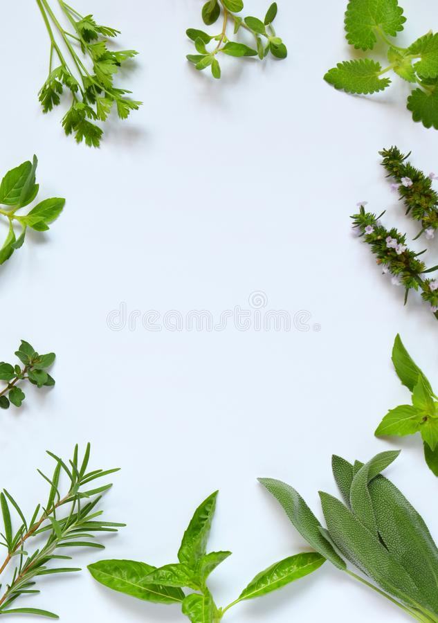 Fresh spicy and medicinal herbs on white background. Border from various herb - rosemary, oregano, sage, marjoram, basil, thyme, m. Int. Food frame for recipe stock photos