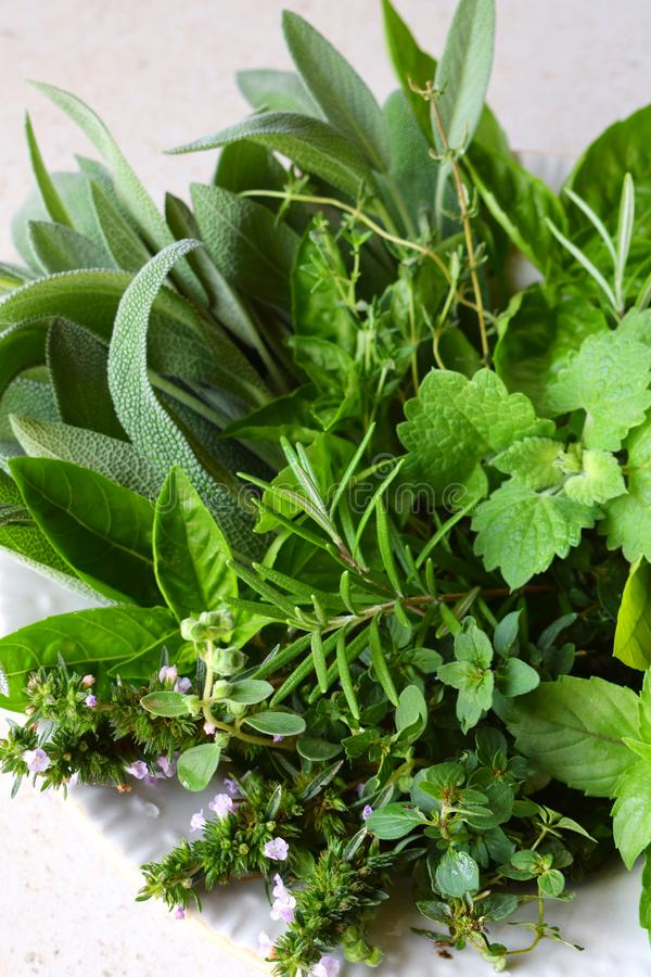 Fresh spicy and medicinal herbs on white background. Bouquet from various herb - rosemary, oregano, sage, marjoram, basil, thyme, royalty free stock image