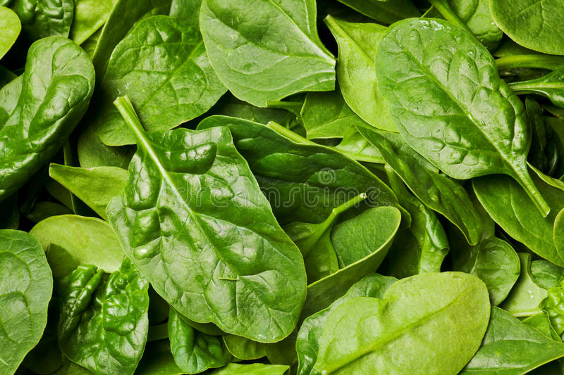 Fresh spinach royalty free stock image